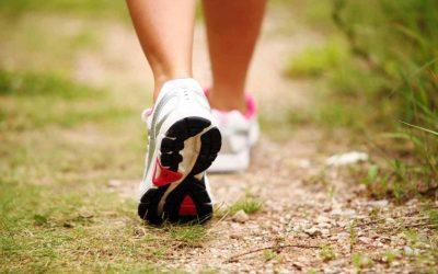 Taller en movimiento. «La caminata dinámica». Collserola 3 febrero de 10 a 13h